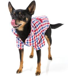 Pop ya collar and get in the game with this striking checked racing dog shirt!