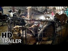 """""""Eating Happiness"""" (2015) is the most important documentary in the fight against dog meat industry in Asia."""