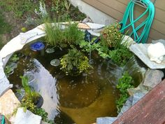 We have a hot tub turned into a pond.  Great addition to my backyard paradise.
