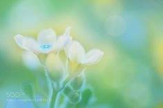 Flower  by mugiwarabousi. Please Like http://fb.me/go4photos and Follow @go4fotos Thank You. :-)