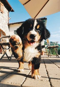 ✰ All social ✰ - sel - Tiere - Perros Cute Little Animals, Cute Funny Animals, Funny Dogs, Cute Dogs And Puppies, Doggies, Cute Animal Pictures, Cute Creatures, Mountain Dogs, Animals And Pets