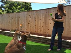 Pooch Selfie: The Best Way to Capture Selfies with Your Dog! by Clever Dog Products — Kickstarter