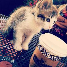 #Cats  #Cat  #Kittens  #Kitten  #Kitty  #Pets  #Pet  #Meow  #Moe  #CuteCats  #CuteCat #CuteKittens #CuteKitten #MeowMoe      Can I have a sip? ...   https://www.meowmoe.com/31339/