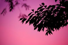 Purple Leaf Silhouette by VeraKratochvil