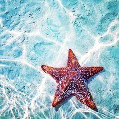 shades of aqua and coral