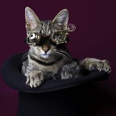 steampunk cat | Sid_Steampunk.jpg