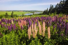 49 Islands You Must Visit Before You Die - PRINCE EDWARD ISLAND, CANADA