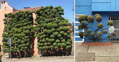 Kelsey McClellan Surreal Photos Of San Francisco Pom Pom Trees San Francisco, Tree Photography, Landscape Photography, Pom Pom Tree, Pom Poms, Surreal Photos, Colossal Art, Elegant Home Decor, Plant Design