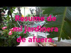 Resume de mi jardinera de afuera