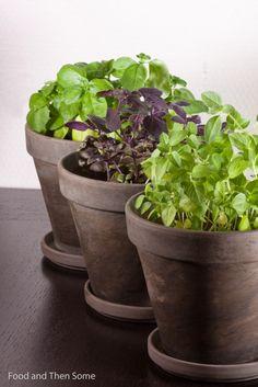 Basil herb Vegetarian Food, Basil, Planter Pots, Herbs, Kitchen, Veggie Food, Cucina, Cooking, Kitchens