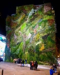 The vertical Garden: es sind tatsächlich lebende Pflanzen #garden #vertical #jardin #green #greenwall #art #artisan #pflanzen #gras