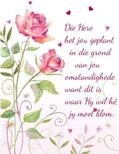 Welcome to my Boards, No Pin Limits Ever, Please Enjoy your Stay & visit as often as you wish, Thank you 😊 Lavender Roses, Pink Roses, Afrikaanse Quotes, Inspirational Qoutes, Motivational Quotes, Goeie Nag, Goeie More, Good Morning Wishes, Rose Cottage