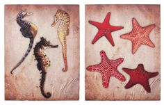 Set Of 2 Seahorse and Starfish Canvas