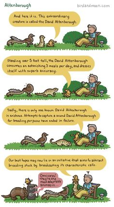 Animals Observing Sir David Attenborough In His Natural Environment (Bird and Moon comics) David Attenborough Quotes, My Face Book, Science And Nature, Along The Way, Just For Laughs, The Funny, Make Me Smile, I Laughed, Documentaries