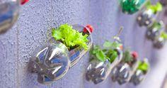 Si no tienes espacio para crecer tu propio huerto puedes hacer un jardín vertical con botellas de plástico recicladas. Aprende cómo aquí.
