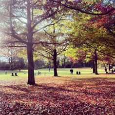 Der Stadtpark schreit förmlich nach einem Agentur-Grillerchen nach Feierabend