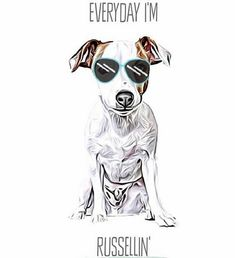 14 Funny Jack Russell Terrier Memes That Will Make You Smile Heaven Art, Dog Heaven, Jack Russell Funny, Jack Russell Terrier, Pet Remembrance, Jack Russells, Shiloh, Animal House, Dog Art