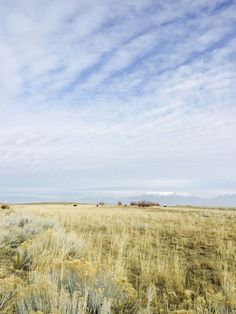 Bison with Mountains in Distance, Fielding Garr Ranch, Antelope Island State Park Utah