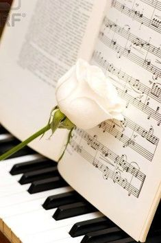 Piano with pale pink rose leaning against sheet music Piano Keys, Piano Music, Art Music, Sheet Music, Music Sheets, Sound Of Music, Music Is Life, Touches De Piano, Mundo Musical