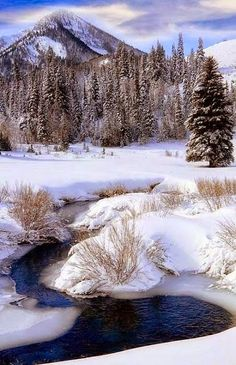 Stunning nature: Winter