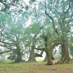 【sakimika】さんのInstagramをピンしています。 《世界にひとりぼっち * * #鹿児島#休日#森林#撮影#千本楠#写真好きな人と繋がりたい#ファインダー越しの私の世界#着物#日本#お写んぽ#天文館#一眼レフ#緑#coregraphy#nikon#camera#walk#kimino#japan#dayoff#funny#inmyhand#forest#tree#green》