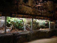 Reptile Exhibit in Sweden