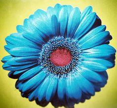 293bf024ca1071fd2015cd97497bc1a4--teaching-colors-aquamarine-blue.jpg