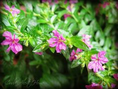 Drought Tolerant Plants !! Great & Needed Post !! by @Tami Arnold Arnold Arnold @ Curb Alert!