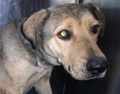 Animal ID\t34744436 \r\nSpecies\tDog \r\nBreed\tGerman Shepherd\/Mix \r\nAge\t1 day \r\nGender\tFemale \r\nSize\tLarge \r\nColor\tBrown \r\nSite\tCity of El Paso, Animal Services \r\nLocation\tSally Port \r\nIntake Date\t2\/27\/2017 \r\n