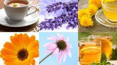 10 plantas y flores para cuidar tu piel