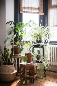 Cluster of indoor plants on stools