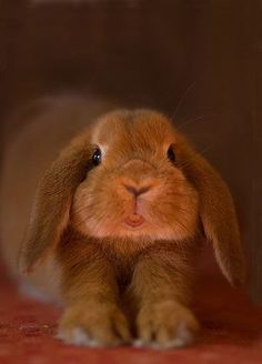 Image result for cute bunny site:pinterest.com