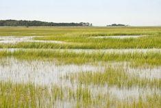 PhD Researcher, Marjolein Helder, discovers new source of clean energy in marshlands - Wageningen UR
