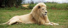Zum Sterben geboren: In Südafrika werden extrem seltene Tiere für reiche Jäger gezüchtet