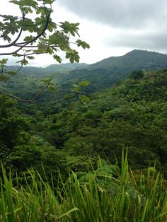 Toro Negro Rainforest.  Puerto Rico. #travel #puertorico