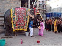 Índia - Tamil Nadu - Madurai Madurai, Vera Bradley Backpack, Bags, South India, Travel, Pictures, Handbags, Bag, Totes