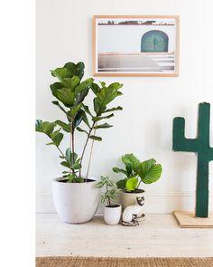 plants make the home