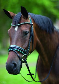 Horse Bridle, Friesian Horse, Pretty Horses, Beautiful Horses, Pony, All About Horses, Hobby Horse, Horse Girl, Saddles