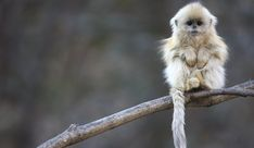 I don't know what kinda monkey this is but I wanna hug it