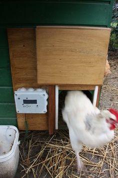 Un enclos pour les poules fabriqu partir de palettes - Porte automatique pour poulailler allemagne ...