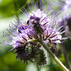 Hummel-Suchbild. 😍  #insekten #hummel #naturephotography #nature Austria, Dandelion, Instagram, Flowers, Plants, Insects, Nature, Nice Asses, Pictures
