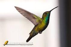 Resultado de imagen para fotos de picaflor Bird, Birds, Animales, Photos, Birdwatching