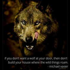 if you don't want a wolf at your door, then don't build your house where the wild things roam. - michael xavier