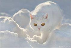 Cattyyy