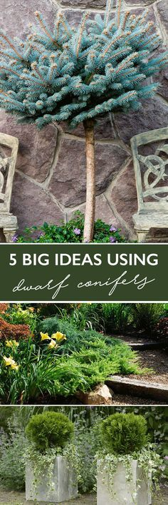 As landscapes are getting smaller and gardeners have less time to care for them, these naturally smaller plants are taking a larger role.