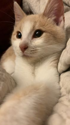 Our snuggle bug! Cute Baby Animals, Animals And Pets, Funny Animals, Cute Cat Gif, Cute Cats, Sweet Kitten, Kittens Cutest, Cats And Kittens, Cat Aesthetic
