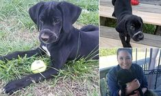 Puppy left  found with its mouth tied shut with a zip back to health