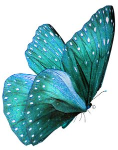 ❥ turquoise butterfly