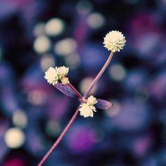 Voice of flower-wordless beauty  #DSLR#camera#landscape#snapshot#photo#instaphoto#media#garden#flower#purple#garden#leaves#nature#natural#hk#hongkong#photography#photographic (by letheyespeak)
