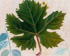 Hoja de parra. 1943. Óleo sobre cartón. 17,5 x 21 cm. Obra de Maruja Mallo